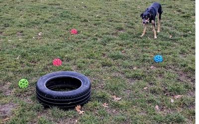 Canine Enrichment…